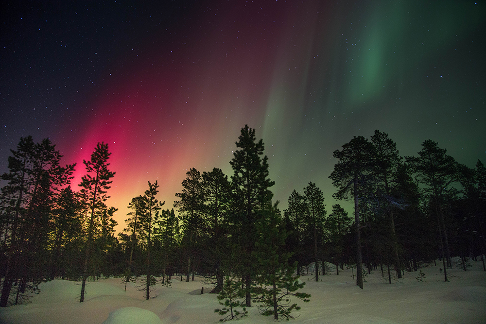 Northern lights red and green above trees in snow